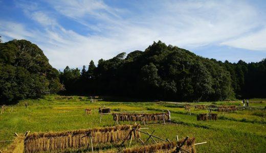 MY田んぼ:里山活動と畦づくり