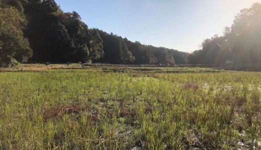 MY田んぼ:大地の復興と大豆収穫